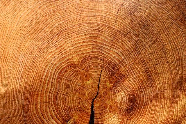 dřevo, letokruhy, strom